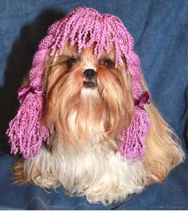 - purplewigdog